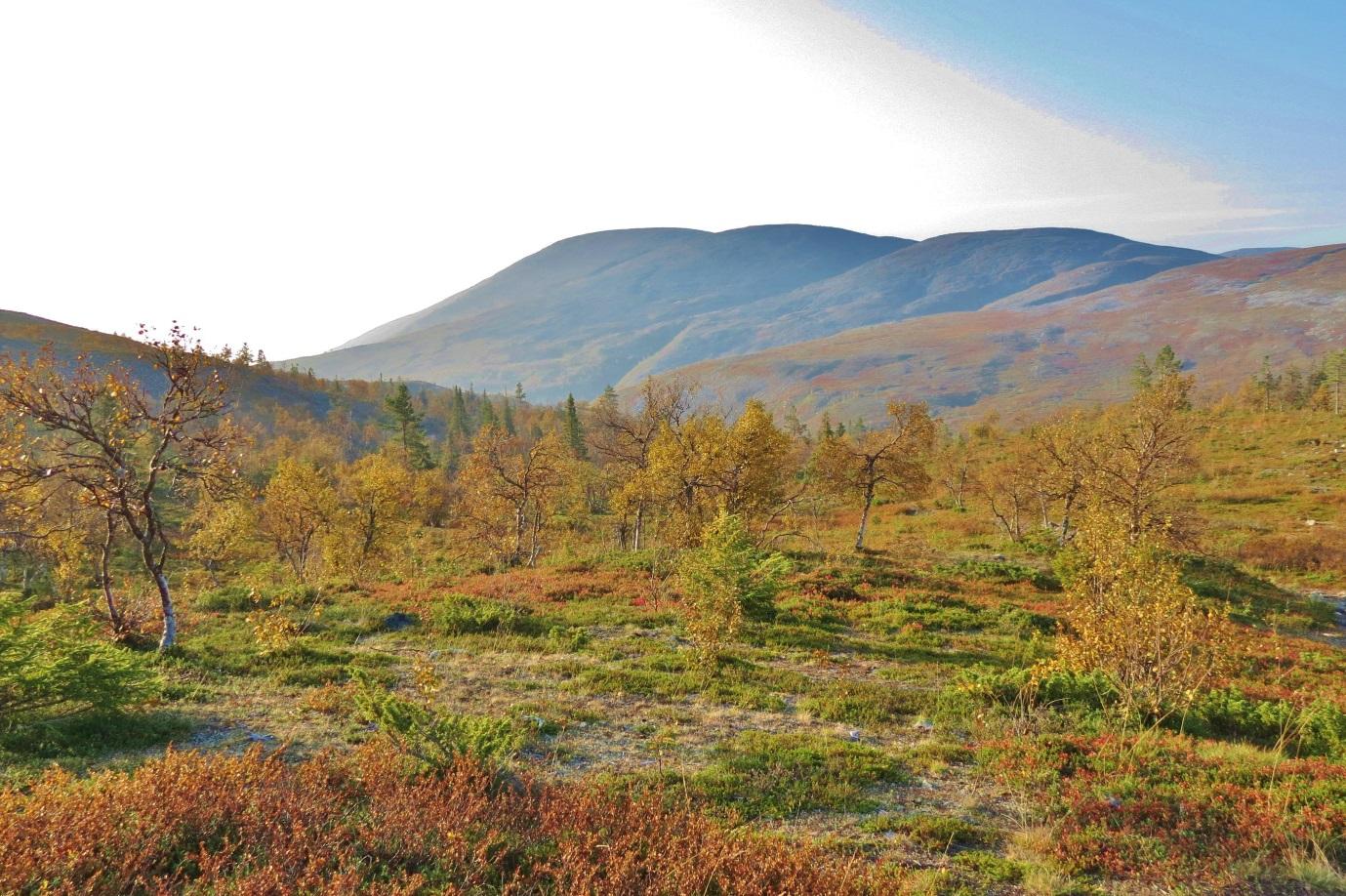 Pallas Yllästunturin Kansallispuisto